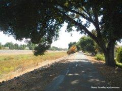 alameda creek trail