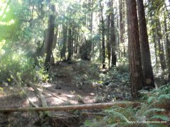 starflower trail
