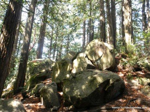 redwood peak