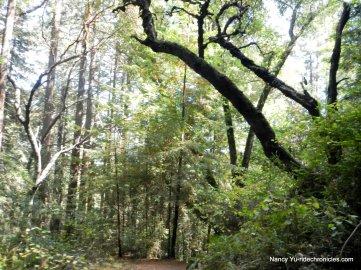 redwood peak trail