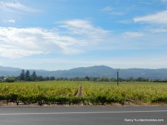 napa valley vineyards