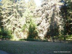 stream trailbig bend meadow