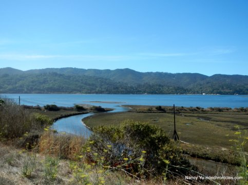 tomales bay views
