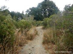 towards skyline ridge/seaview trail