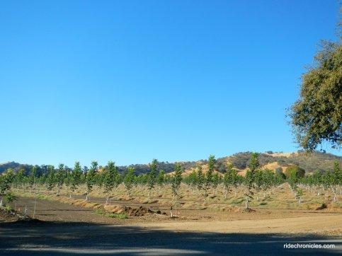 cherry glen rd orchards