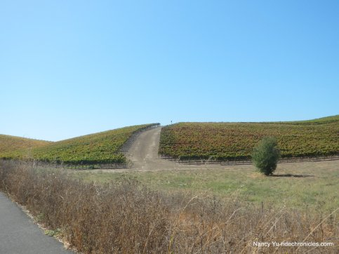 carneros valley vineyards