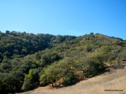 to madrone trail