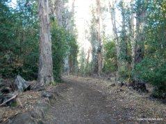 las trampas mt diablo regional trail