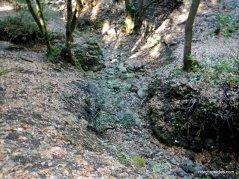 bollinger creek