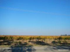 walnut grove rd