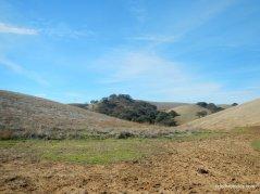 ridge top landscape