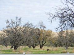 marsh creek rd