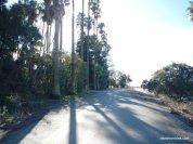 randall island rd