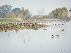 desmond rd-cosumnes preserve