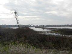 lost slough wetlands