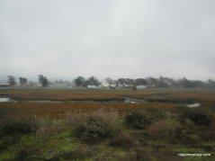 wetland and marshes
