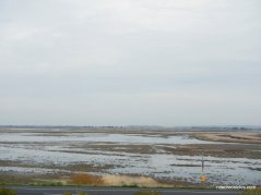 grizzly bay wetlands