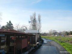 willow wood school