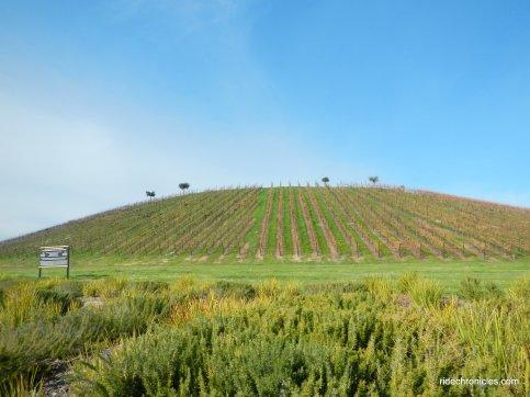 vineyards pkwy