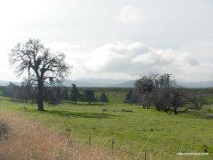 marsh creek ranch