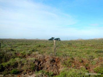 coastal landscapepastoral land
