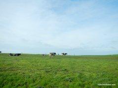 historic B ranch