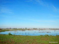cosumnes river preserve