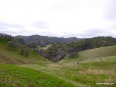 chaparral hills