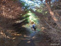 alamere falls trail