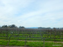 stanly ranch vineyards