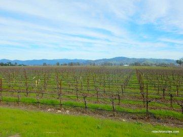 stanly ranch vineyards