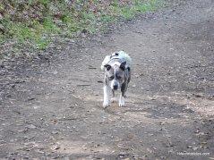 buckeye ranch trail