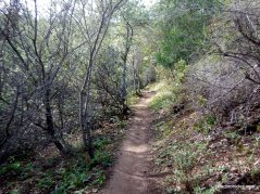 middle trail
