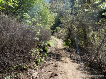 donner trail