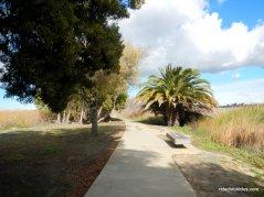 dow wetlands preserve