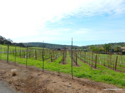 lovall valley vineyards