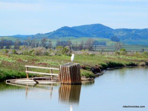 milton rd-wildlife preserve