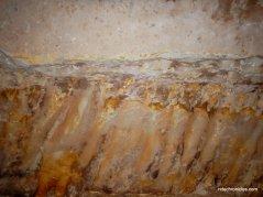 plant/animal fossils