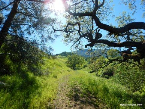 clayton oaks rd