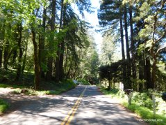 descend mt veeder rd