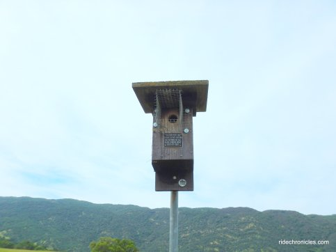 blue bird nest box