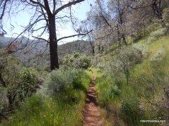 globe lily trail