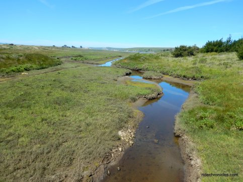 drakes bay marsh-wetland