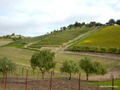 rolling hillside vineyards