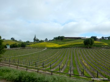 rolling hillside vineyards