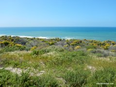 jalama beach landscape