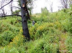 dense riparian landscape