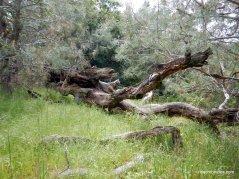 murchio spring area