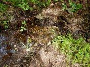 murchio spring
