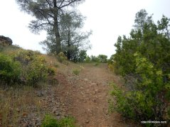 moses rock ridge trail
